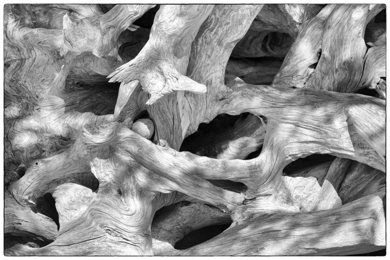 Driftwood Organic 1